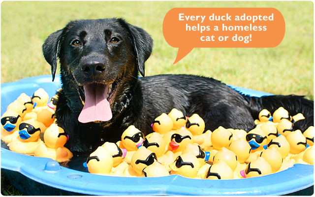 Every duck adopted helps a homeless cat or dog