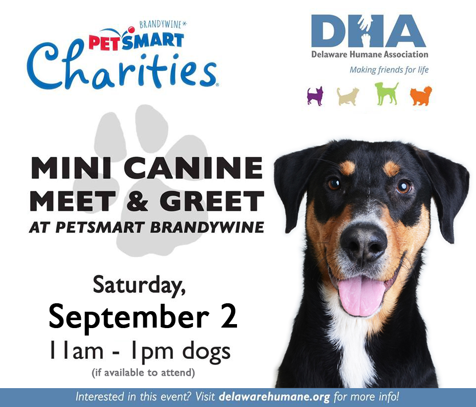 Mini Canine Meet & Greet