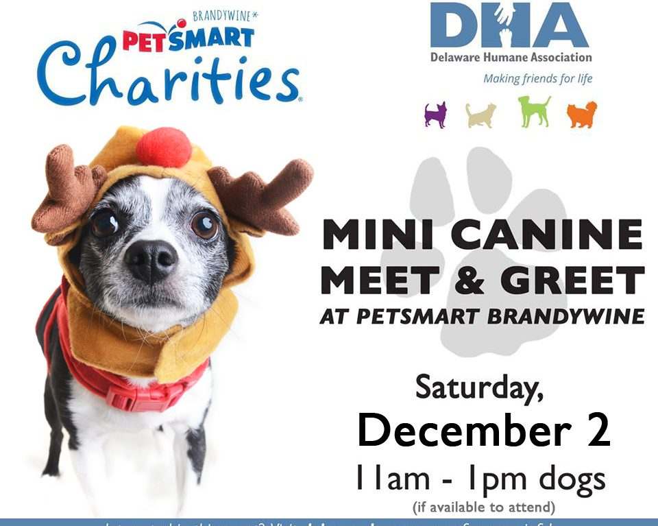 Adopt dont shop archives page 2 of 3 delaware humane association mini canine meet greet m4hsunfo