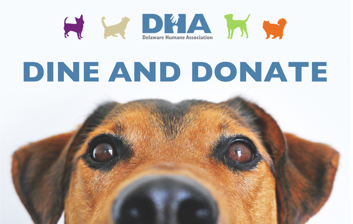 Available Dogs - Delaware Humane Association
