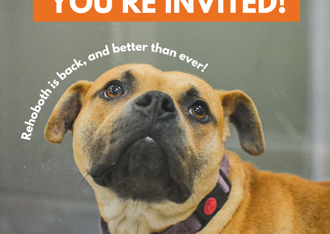 DHA Hosts Virtual Reopening Event to Celebrate Completion of Rehoboth Beach Adoption Center Renovation